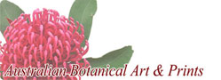 Australian Botanical Art and Prints